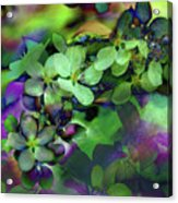 Flow Ers Squared Acrylic Print