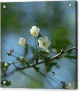 Flower # 056 Acrylic Print