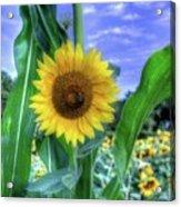 Flower # 38 Acrylic Print