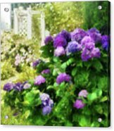 Flower - Hydrangea - Lovely Hydrangea  Acrylic Print by Mike Savad