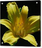 Flower 1 Acrylic Print