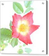 Flower 17 Acrylic Print
