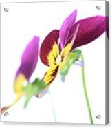 Flower 18 Acrylic Print