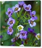 Flower 2 Acrylic Print