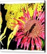 Flower 23af, Ny, 16 Acrylic Print