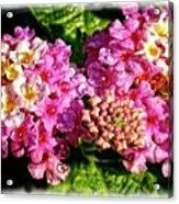 Flower 23f, Ny, 16 Acrylic Print