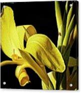 Flower 29f, Ny, 16 Acrylic Print