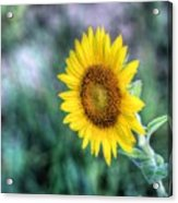 Flower #42 Acrylic Print