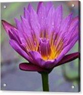 Flower 5 Acrylic Print