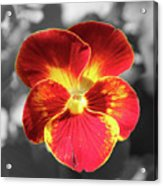 Flower 5 - Reverse Black And White Acrylic Print