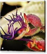 Flower 55f, Ny, 16 Acrylic Print