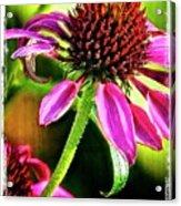 Flower 70f Acrylic Print