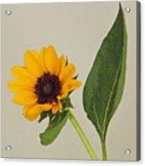 Flower 8-11 Acrylic Print