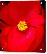 Flower 8 Enhanced Acrylic Print