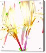 Flower 9315 Acrylic Print