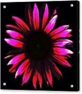 Flower A Go-go Acrylic Print