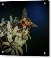 Flower And Bee Acrylic Print