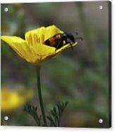 Flower And Bug Acrylic Print