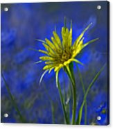 Flower And Flax Acrylic Print