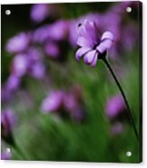 Flower And Fly Acrylic Print