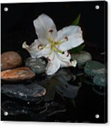 Flower And Stone Acrylic Print