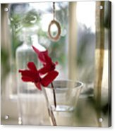 Flower And Window Acrylic Print