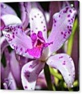 Flower Art - Intimate Orchid 4 - Sharon Cummings Acrylic Print