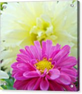 Flower Art Print White Pink Dahlia Floral Canvas Baslee Troutman Acrylic Print