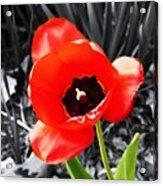 Flower As Art Acrylic Print