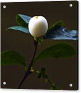 Flower Ball Acrylic Print