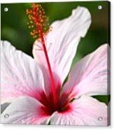 Flower Beauty2 Acrylic Print