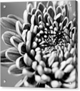 Flower Black And White Acrylic Print