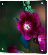 Flower Bloom Acrylic Print