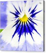 Flower Blossom 1 Acrylic Print
