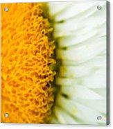 Flower Blossom 2 Acrylic Print