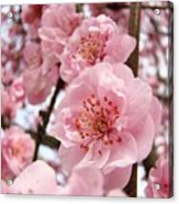 Flower Blossoms Art Spring Trees Pink Blossom Baslee Troutman Acrylic Print