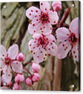 Flower Blossoms Pink Tree Blossoms Art Print Giclee Spring Flowers Acrylic Print