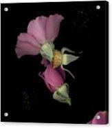 Flower Box Purple Cut Acrylic Print