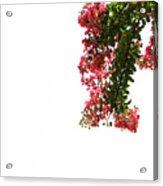 Flower Branch Acrylic Print