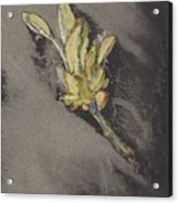 Flower, Carel Adolph Lion Cachet, 1874 - 1945 Acrylic Print