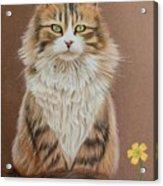 Flower Cat Acrylic Print