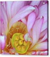 Flower Center Acrylic Print