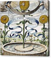 Flower Clock, 1643 Acrylic Print