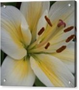 Flower Close Up 1 Acrylic Print