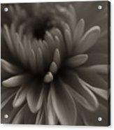 Flower Close Up Acrylic Print