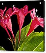 Flower Composite Trio Horizontal Acrylic Print