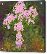 Flower Cross Fancy Acrylic Print
