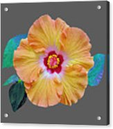 Flower Delight Acrylic Print