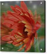 Flower Dreams Acrylic Print