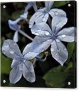 Flower Droplets Acrylic Print